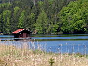 Hackensee