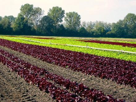 http://www.gpswandern.de/maxemanuel/salat.jpg